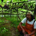 誰も店をやらない場所で挑戦したい! ブドウ農家とワイン醸造所をはじめました