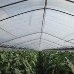 保温効果が向上!! 内張り・カーテン用農業用ビニールフィルム