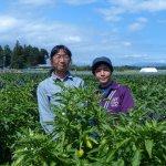 地域や栽培環境に合った品種づくりで自然農法の確立に挑む Happy Village Farm 石綿 薫さん・奈巳さん【後編】